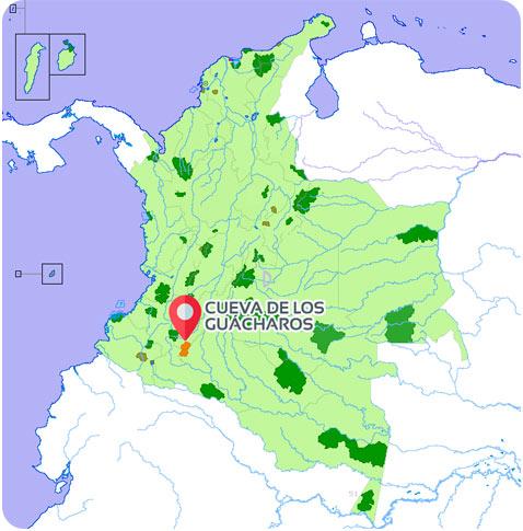 guacharos